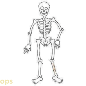 HALLOWEEN SKELETON DOOR HANGER